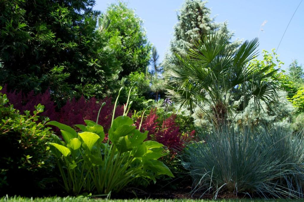 desantis plants
