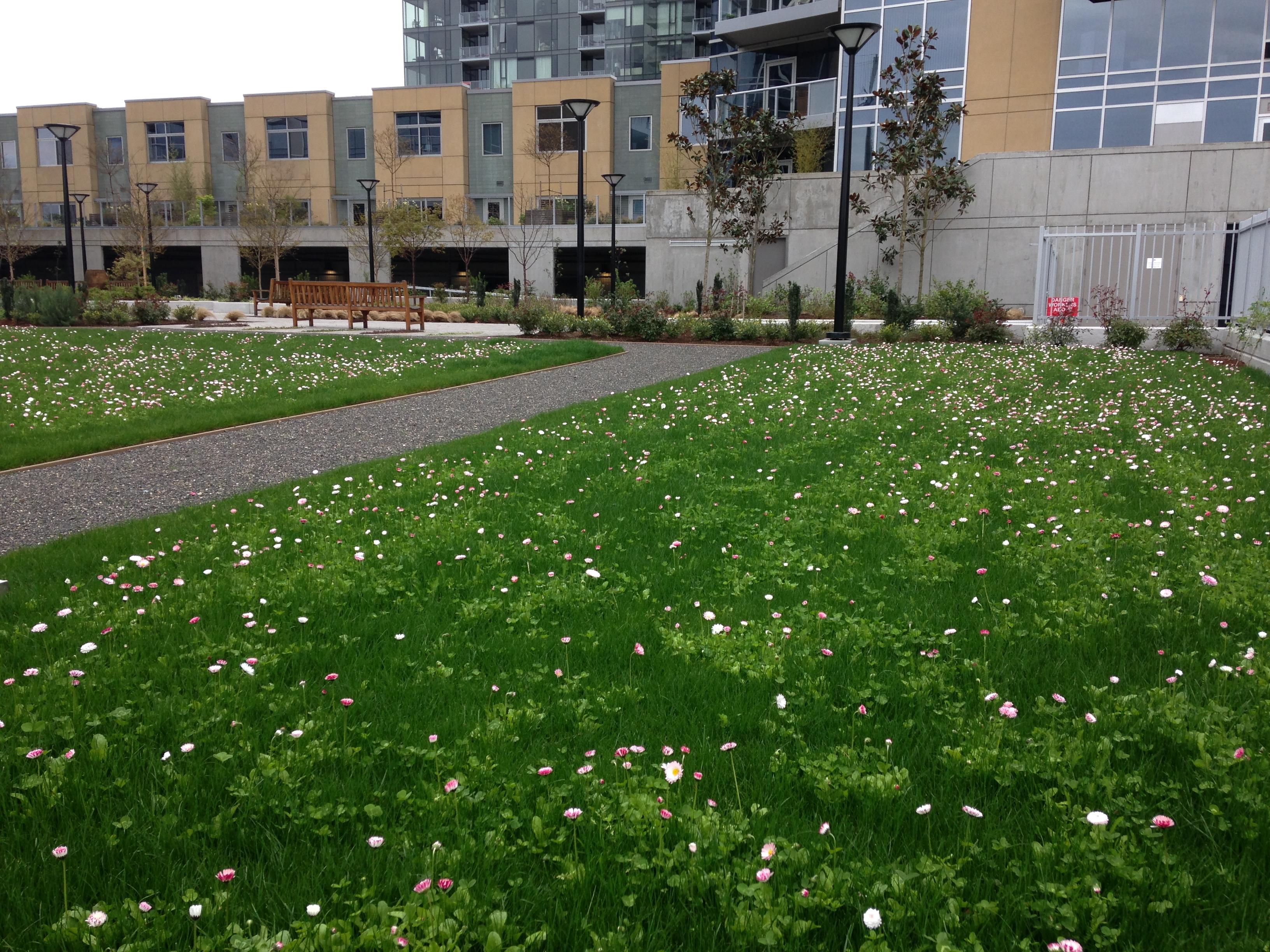 Beautiful Eco Lawn Landscaping Portland Oregon