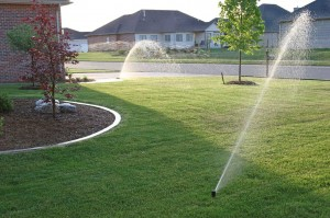 Well irrigated lawn
