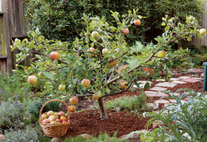 Are Fruit Trees for the Birds? Maybe Not.