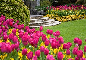 Think Ahead for Rewarding Blooms Next Spring