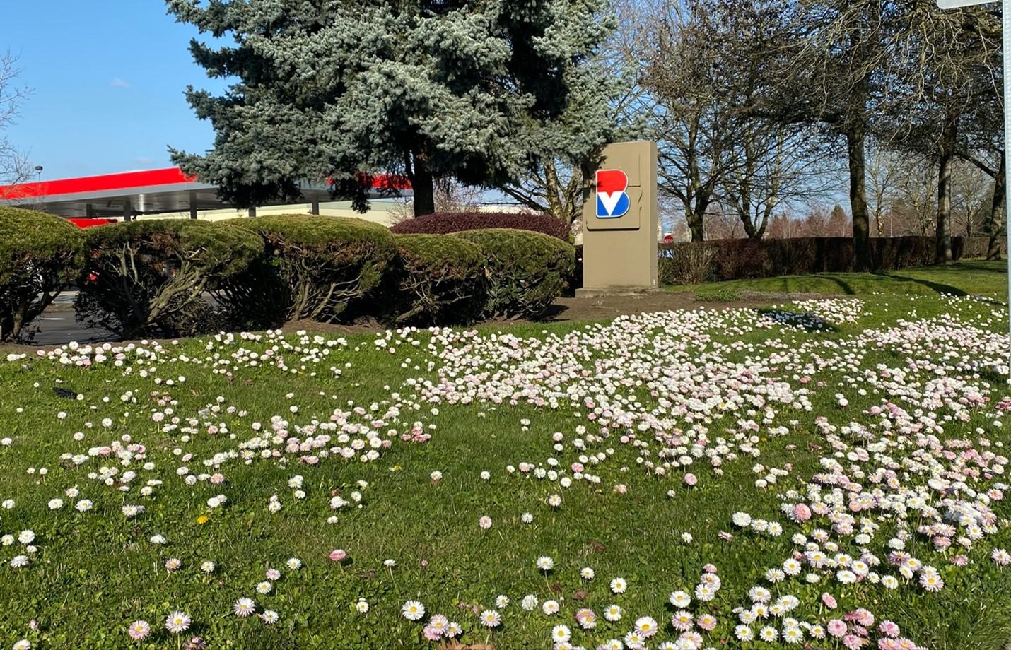 Let it Bee: Burgerville's Meadow Lawn is Ground Zero for Pollinators